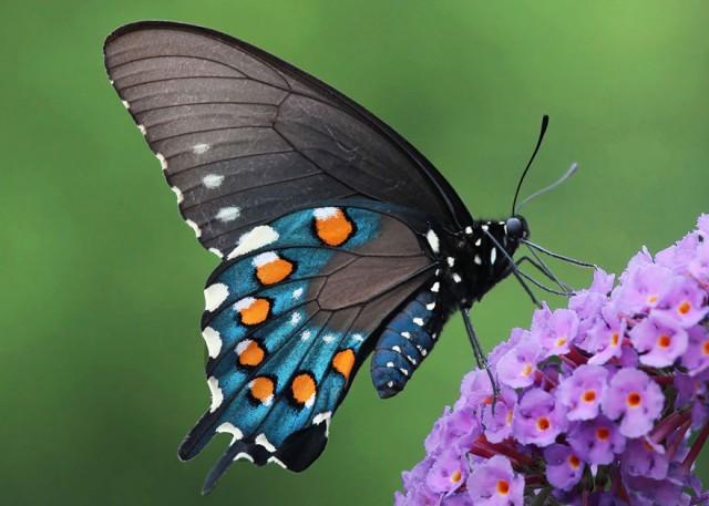 30-caterpillar-moth-butterfly-before-after