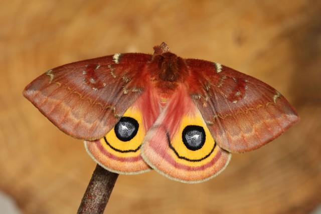 32-caterpillar-moth-butterfly-before-after