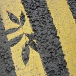 【神技動画】世界最速のロードマーカー。白線引きの達人技術者