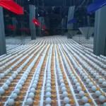 【びっくり2分動画】1650個のバネ式ネズミ捕りとピンポン球の連鎖反応
