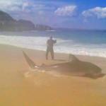 オーストラリアの釣り師が手釣りで4メートルの巨大サメを2時間で釣り上げた!!